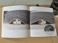 moi-maru-chat-enrobe-1