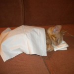 Un chat qui dort dans un lit fait de mouchoirs