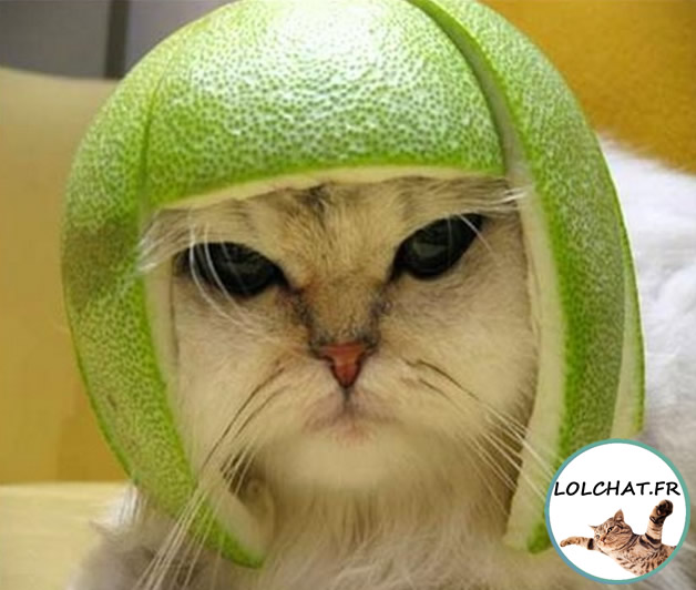 chat au casque citron