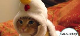Chat déguisé en poule