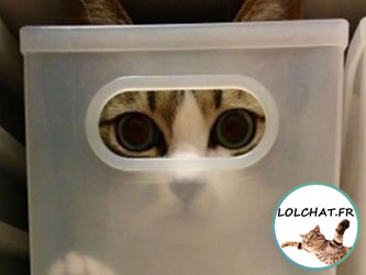 Le chat invisible