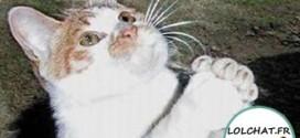 Le chat qui vous supplie