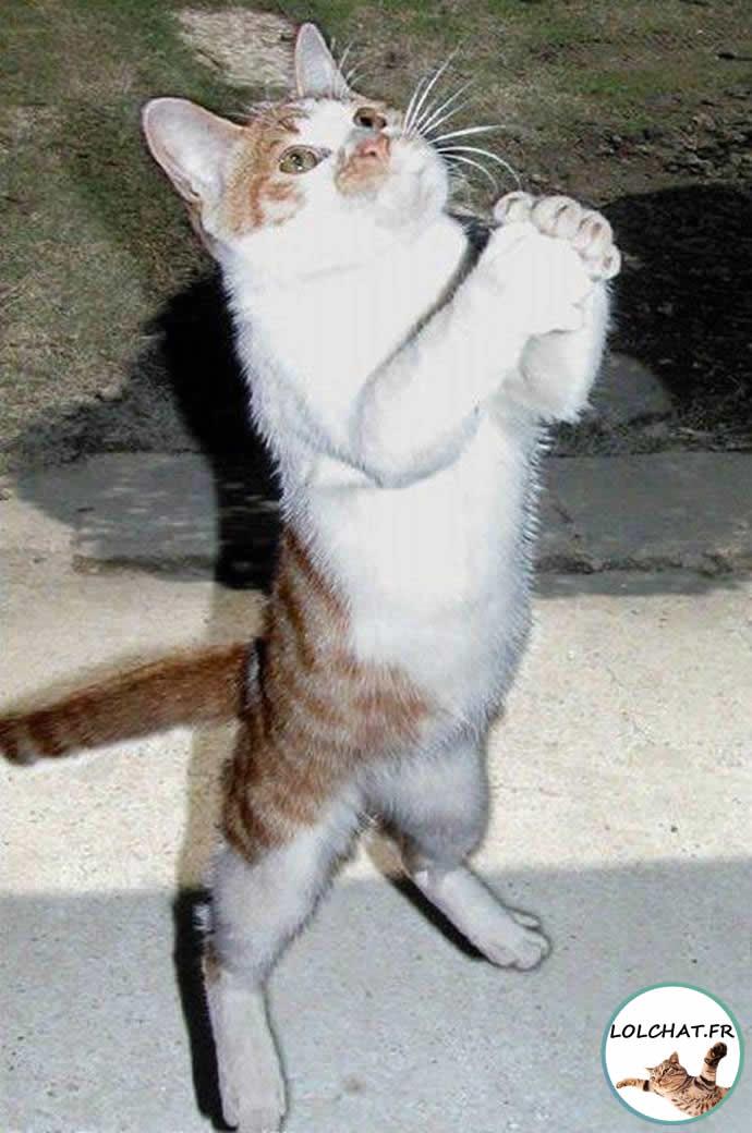 Le chat qui implore