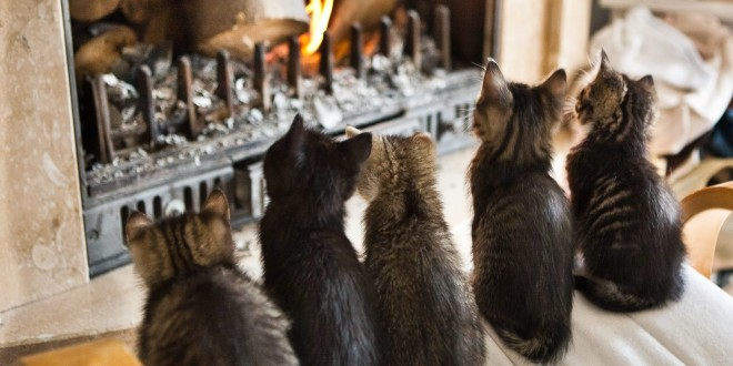 Des chats fascinés par la cheminée