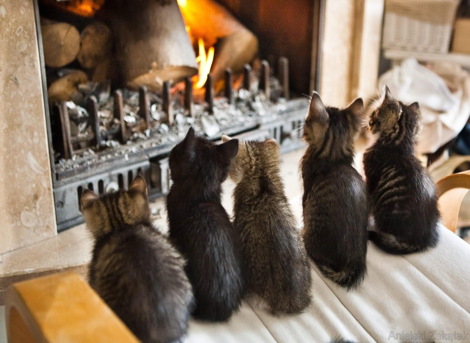 Des chats et la cheminée