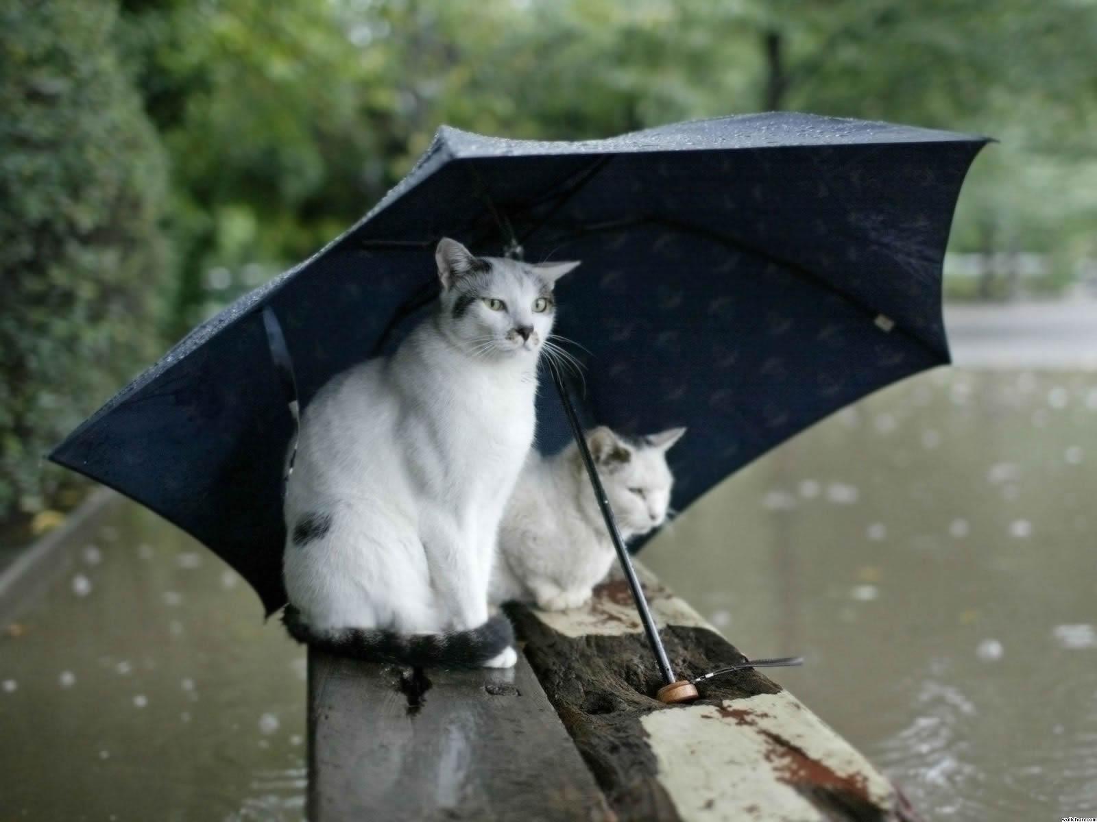 chats-et-parapluie.jpg