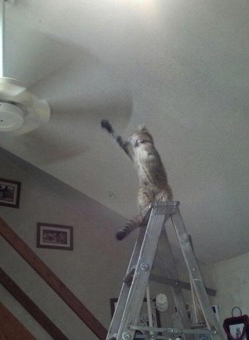 Chat jeu dangereux escabeau ventilateur