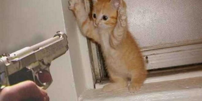 Le chaton «Haut les mains»
