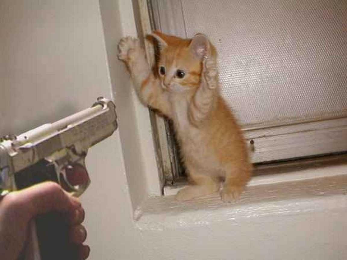 chaton-haut-les-mains