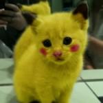 Chat déguisé en Pikachu (Pokemon)