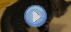 Vidéo d'un chat totalement fou qui saute dans tous les sens