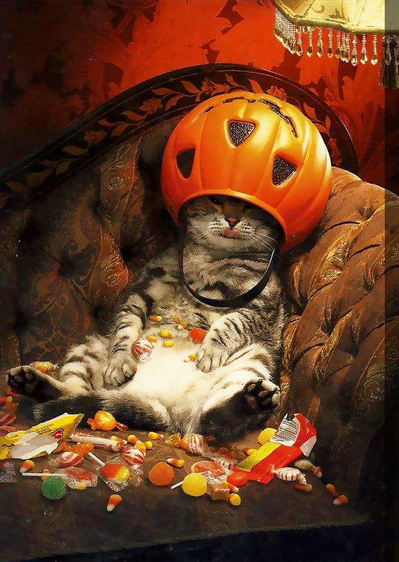 chat qui s 39 est gav de bonbons pour halloween lol chat. Black Bedroom Furniture Sets. Home Design Ideas