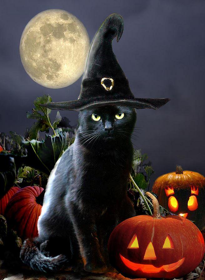 Un chat noir, son chapeau et des citrouilles