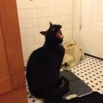 Le chat qui se trouve trop gros