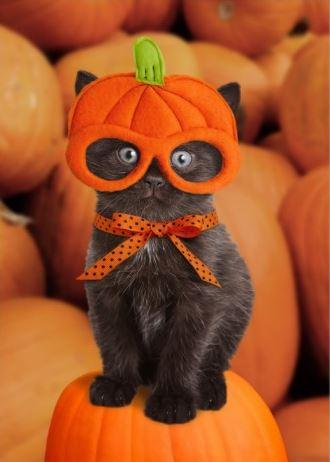 echange avec membres zc - Page 12 Chaton-citrouille-lunettes-halloween