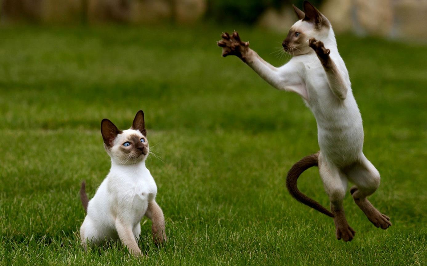 Deux chats bizarres