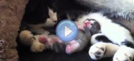 Vidéo d'un chaton en train de rêver qui danse en rythme