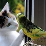 Un chat et un oiseau amis et séparés par une vitre
