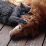 Un chat et un chien qui dorment ensemble