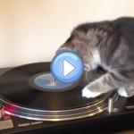 Vidéo d'un chat DJ aux platines sur du Bob Marley