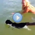 Vidéo d'un chat qui nage dans la mer !
