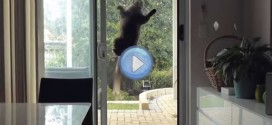 Vidéo du chat ventouse – Mission impossible