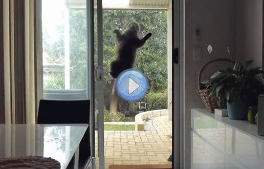 Vidéo du chat ventouse – Mission impossible