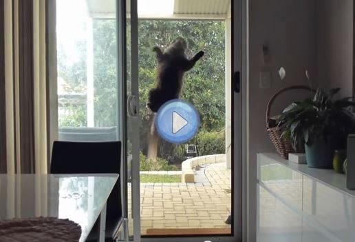 Vidéo du chat ventouse , Mission impossible , Lol Chat , Images, photos et  vidéos de lolcats