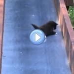 Vidéo de chatons qui glissent sur un toboggan
