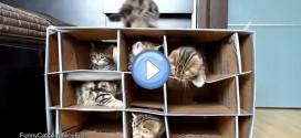 Vidéo de chatons qui jouent dans un chateau fait de cartons