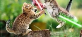 Deux chatons avec des sabres lasers – Star Wars