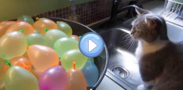 Vidéo d'un chat qui éclate des ballons bombes à eau