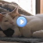 Vidéo d'un chat et d'un lapin meilleurs amis : c'est fou !