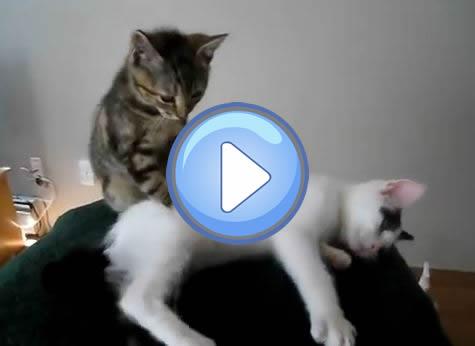 chat cam prostate massage