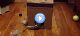 Vidéo d'un chat qui range ses jouets dans une boite ! Incroyable