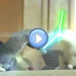 Vidéos des chatons Jedi - Star Wars