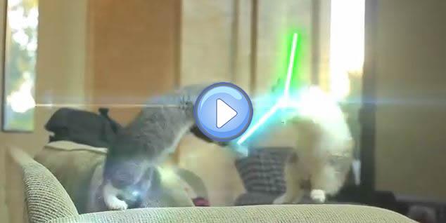 Vidéo des chatons Jedi – Star Wars