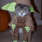 Le chat Yoda - Star Wars
