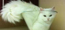Le chat qui se coince dans un vase