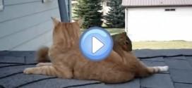Vidéo d'un chat et d'un écureuil qui jouent ensemble : c'est fou !