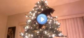 Vidéo d'un chat qui grimpe dans un sapin et le fait tomber : quel acrobate !