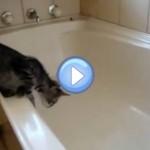 Vidéo d'un chaton qui tombe dans une baignoire vide et qui glisse : trop drôle !