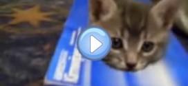 Vidéo de chatons qui jouent dans une boite – Trop mignon !