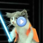 Vidéo : L'empire Contre Attaque version Lol Chats - Star Wars