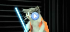 Vidéo : L'empire Contre Attaque version Lol Chats – Star Wars