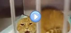 Burger, le chat apeuré le plus en colère au monde ! Il fait peur …