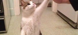 Le chat qui fait un high-five !