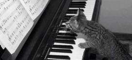 Le chaton qui joue du piano – trop mignon !