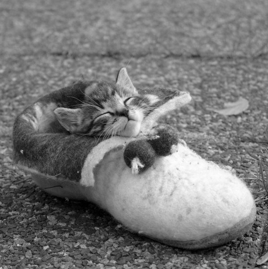 Le chaton qui dort dans une pantoufle : trop mignon