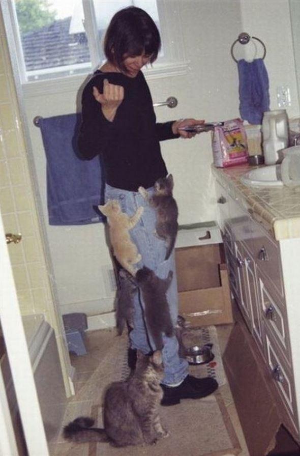 Les chatons qui grimpent sur leur maîtresse pour manger plus vite